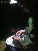 George was very excited to be ringing his first ever European Storm Petrel