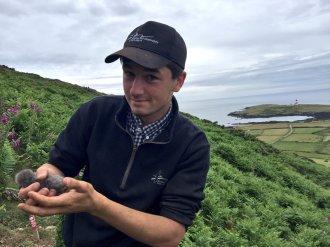 Me handling the 1st Manx Shearwater (Puffinus puffinus), of the year!