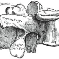 Lumbar Spine Anatomy (part 3: Lumbar Lower Spine)
