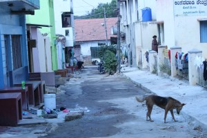 stray dog in mysore