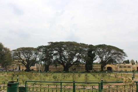 Mysore Palance Trees
