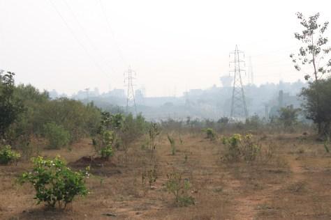 desolation in India