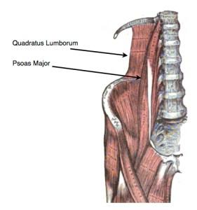 Gray's Quadratus Lombrum