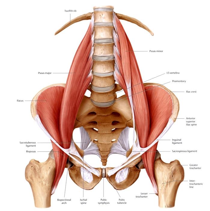 Anatomy Of The Lower Back Elliots World