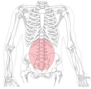 lumbar_region from wikipedia
