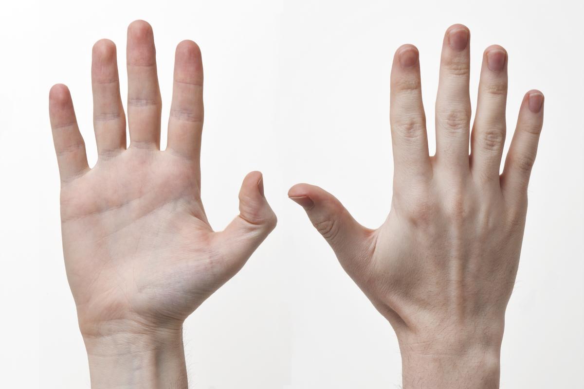 Finger Digits Anatomy Topsimages