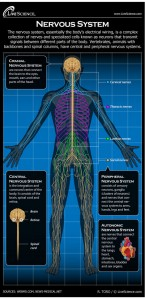 Yoga's Primary Benefit LiveScience_Nervous_System