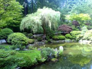 landscaping pond1