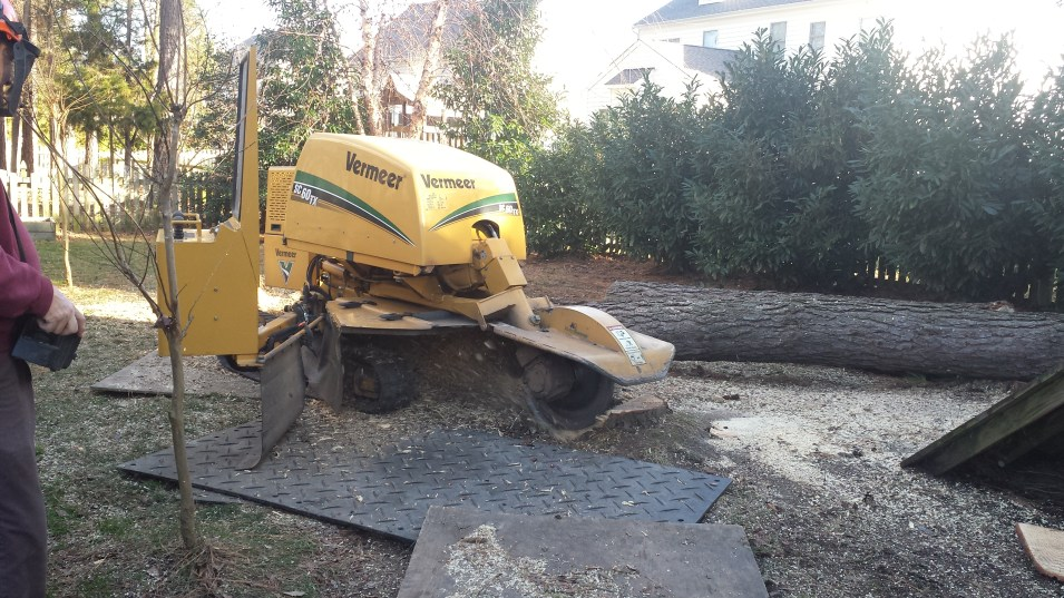 Stump Removal Services in Richmond Virginia