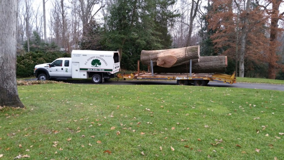 Tree removal in Richmond, VA