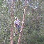 tree pruning rva
