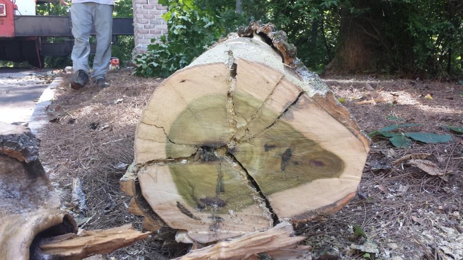 tree removal rva