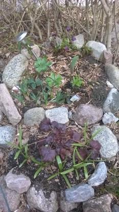 Trädgård 1600416 4