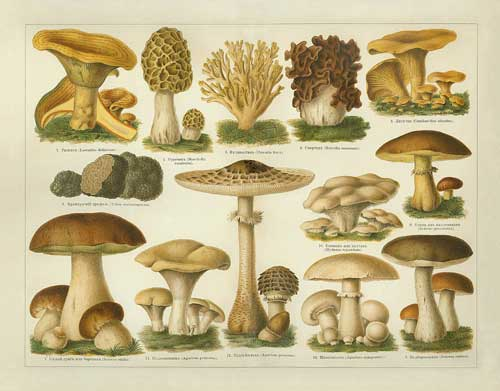 mushroomplate1