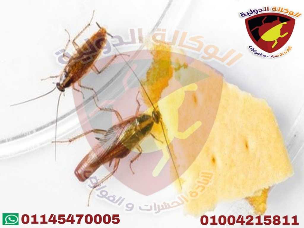 الوكالة الدولية لابادة الحشرات والقوارض