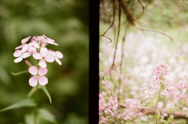 Close ups of flowers.