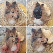 koita, collie, koiran kuvaus, koira huovasta,