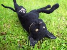 musta kissa5