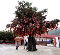 Wishing Tree New Territories