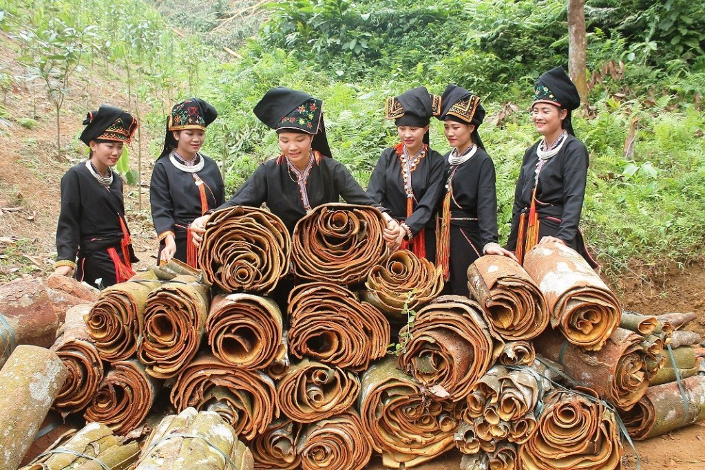Vietnamese girls are happy with good quality raw cassia. From this, manufacturers will make Cinnamon Stick, Cinnamon Powder, and good price of broken cassia in Vietnam.