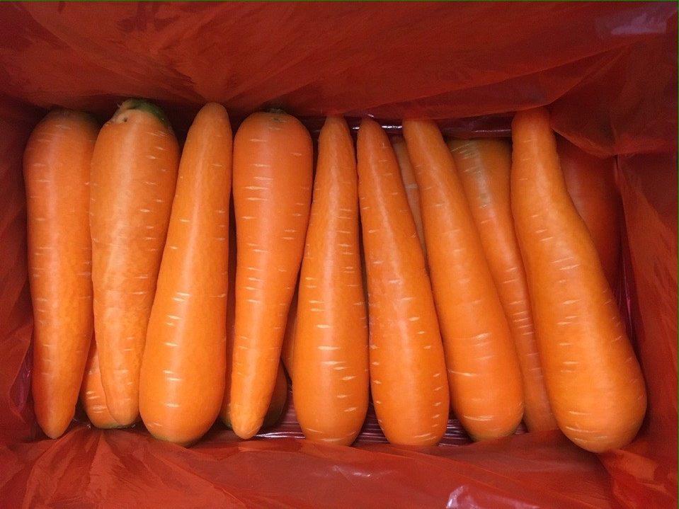 Fresh Carrot in Vietnam size 1L weight 200-250gm/ piece, new crop fresh carrot in Vietnam