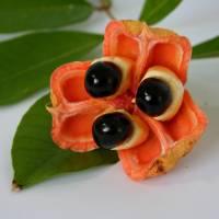 Las 30 frutas exóticas más hermosas del mundo