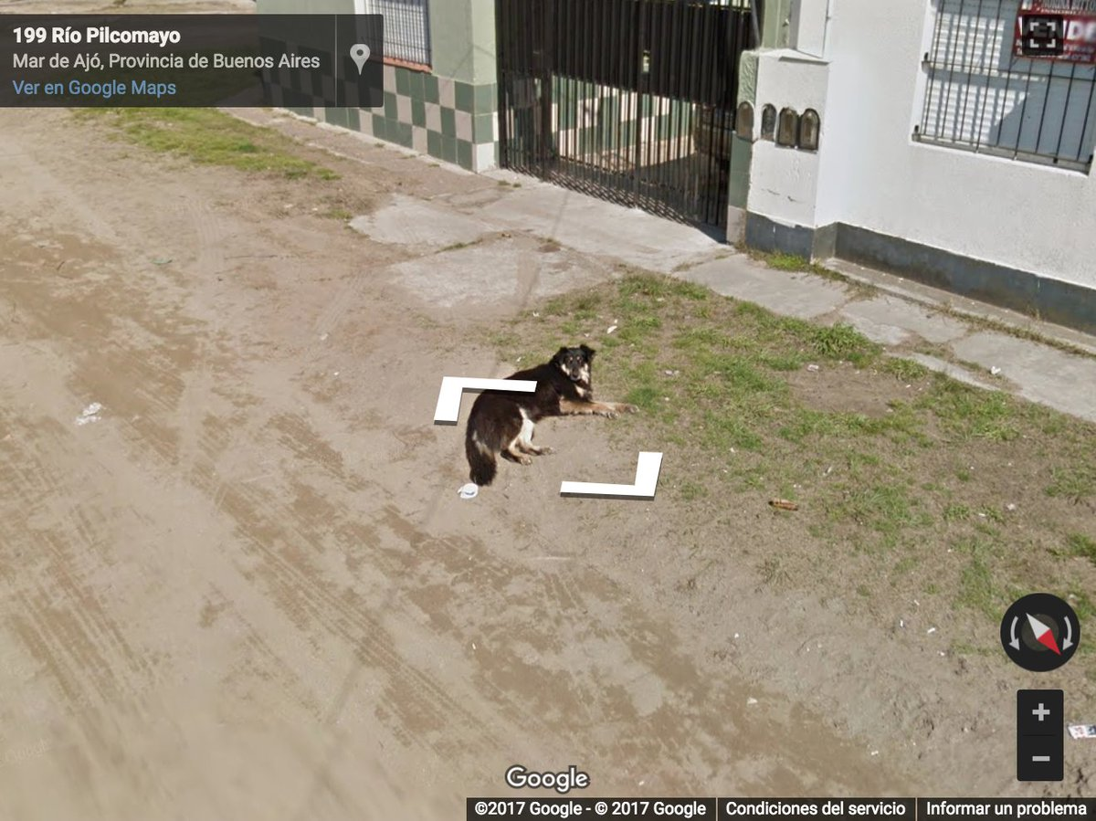 Los perritos captados in fraganti por Google Street View son todo lo que queremos ver en internet 📷🐶