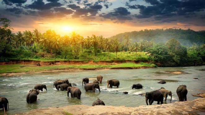 Resultado de imagen para sri lanka tourism