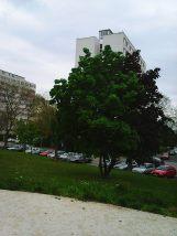 Photo3326
