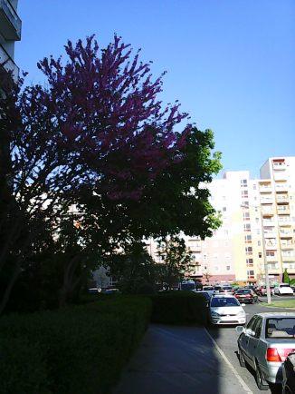 Photo3389