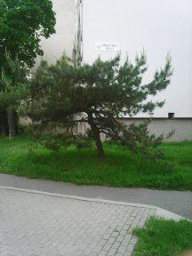 Photo3481