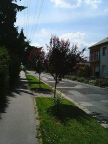 Photo3577
