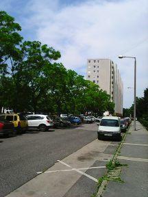 Photo4249