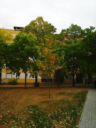 photo5207