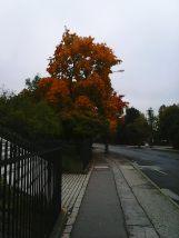 photo5608