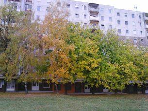 photo5981