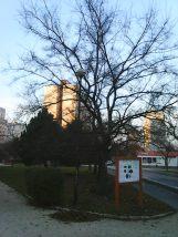 photo6173