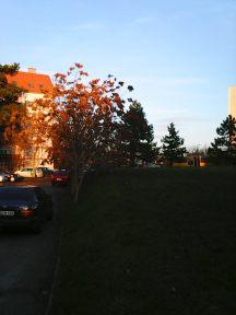 photo6215