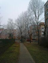 photo6690