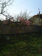 Photo7811