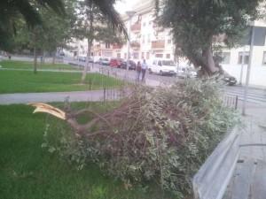 Rama caída en parque infantil de Santa Rita_paterna