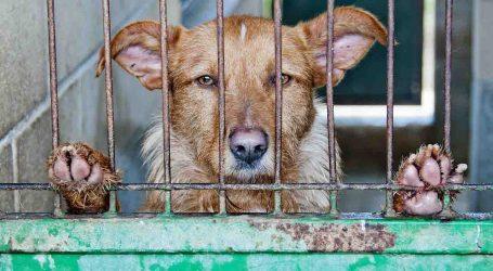UPyD pide que todos los pueblos de la Mancomunitat de L'Horta Sud se adhieran al servicio de custodia de animales
