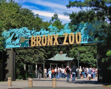 Bronx Zoo field trips
