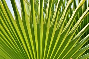 james, palm, leaf