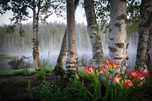 landscape, nature, birch