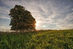tree, landscape, green