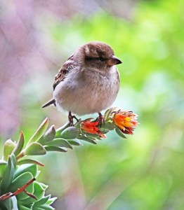 bird, sparrow, cute