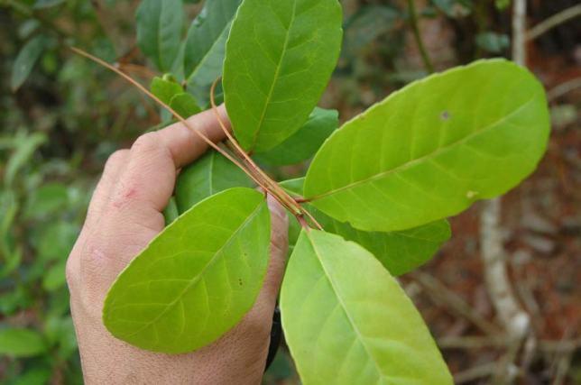 plantacion