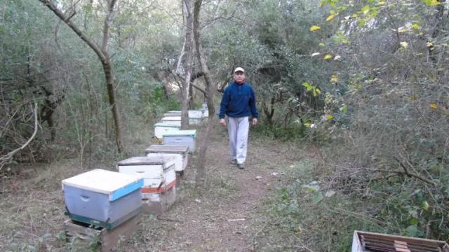 Confirman que un pesticida mató a los 70 millones de abejas en Traslasierra 1