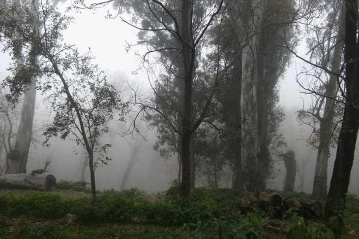 LA FOTO DEL DÍA: un manto de neblina en Villa Leonor 10